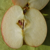 lekker appeltje