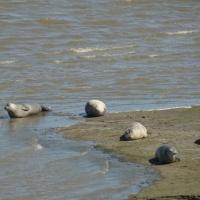 Termunter zeehonden