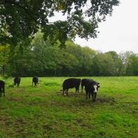 wandelen bij Eelde Paterswolde... Friesche Veen
