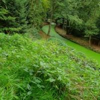 Groen in het Slochterbos