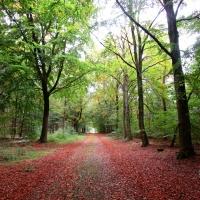 genieten in de bossen bij Borger